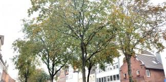 Kastanien Kaiserswerth